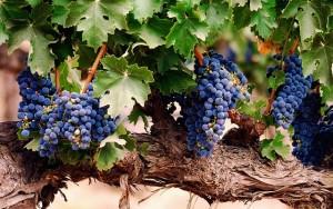 grape-1133200_640